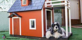 realizar casa para perro paso a paso
