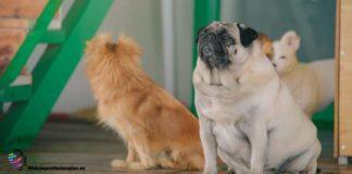 peluqueria canina leganes