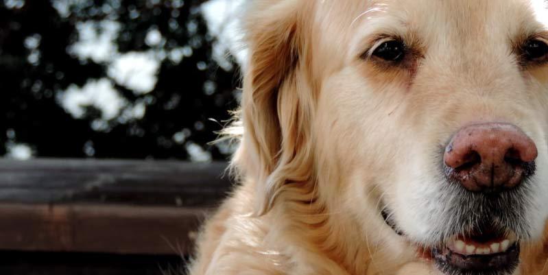 peluqueria canina a domicilio madrid